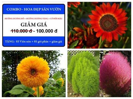 Bộ Hạt Giống Hoa Đẹp Sân Vườn