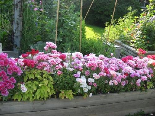 Trọn bộ sản phẩm trồng và chăm sóc hạt giống hoa hồng xuân