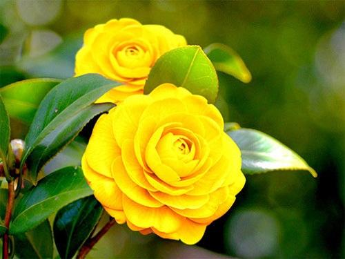 Trọn bộ sản phẩm trồng và chăm sóc hạt giống hoa trà my